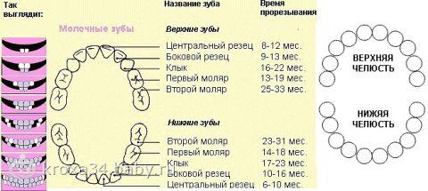 Порядок (схема) прорезывания молочных зубов у детей