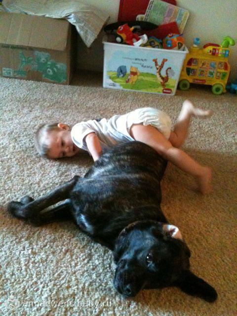 вот так издеваемся над собакой