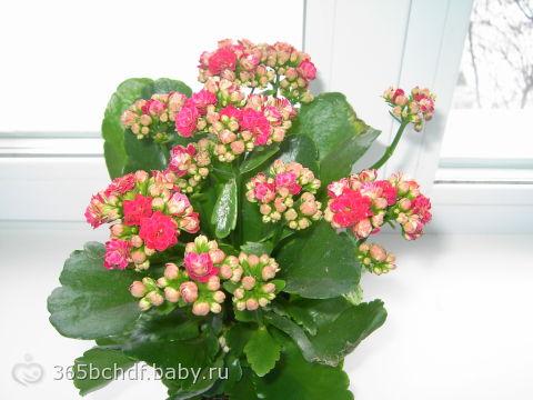 Цветы цветущие все лето без рассады название и фото 14