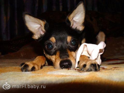Ребенок и собака в доме, и свекровь…