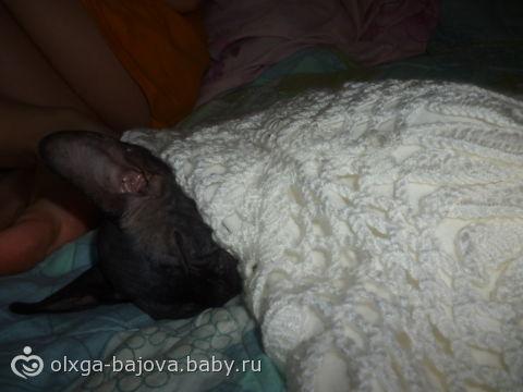 моя котейка похожа на старенькую, старенькую бабушку)))) (фото)